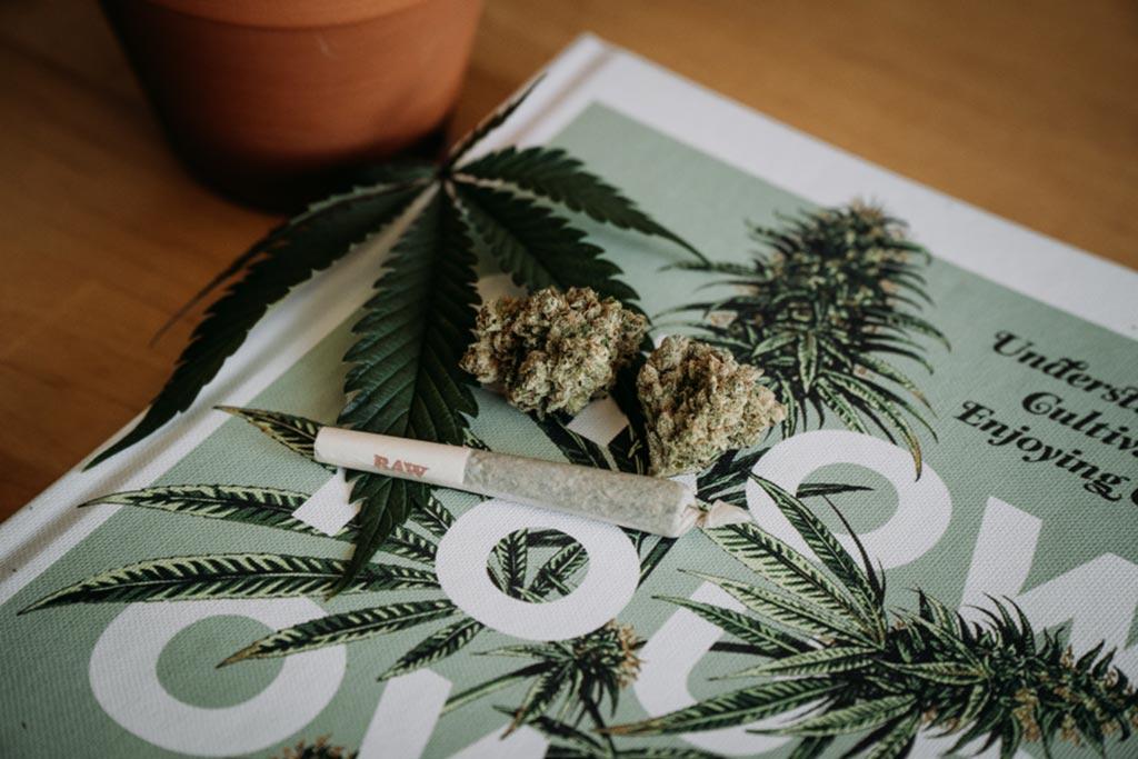 redes sociales más populares para promocionar cannabis medicinal